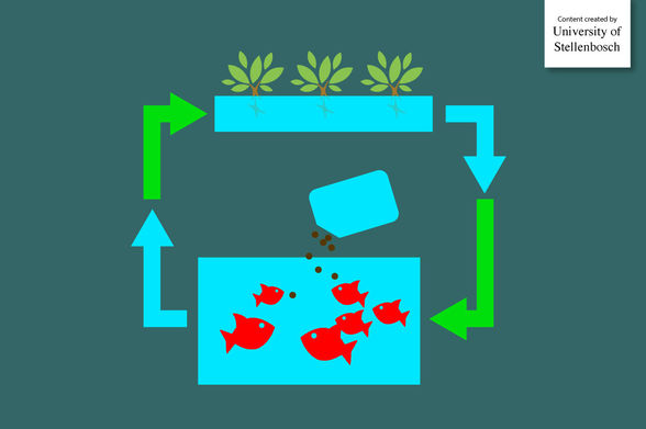 Web-article_aquaponics_new